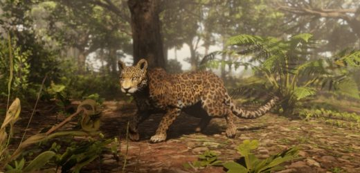 Red Dead Online Invites You To Track And Study Animals As The Naturalist