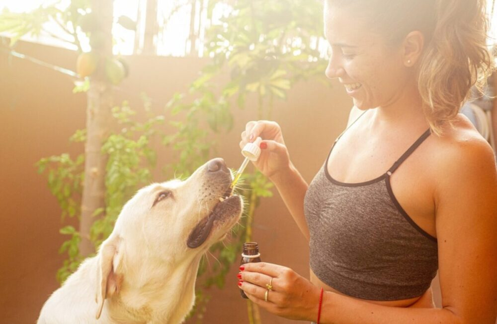 6 Reasons Why CBD Oil Can Improve Your Pets Health
