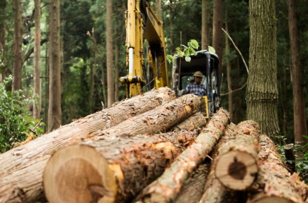 7 Most Common Forestry and Logging Equipment