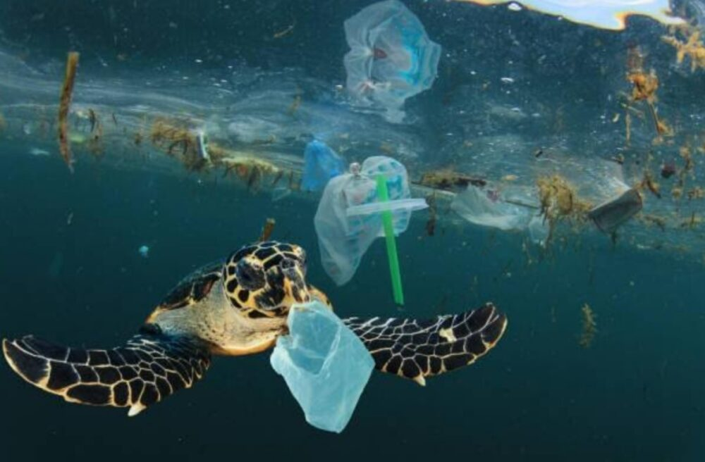 Is Plastic Taking Over the Ocean? Hard Facts