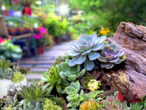 How to Grow and Care for Succulents Outdoors?