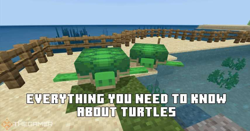 Minecraft: Everything You Need To Know About Turtles