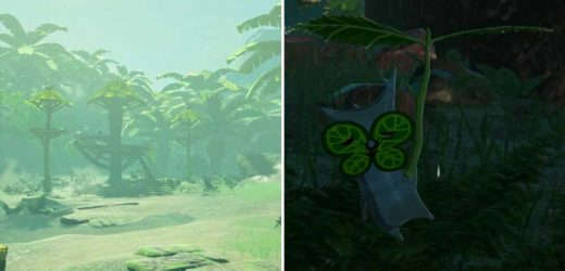 Age of Calamity: All Damel Forest Korok Seed Locations