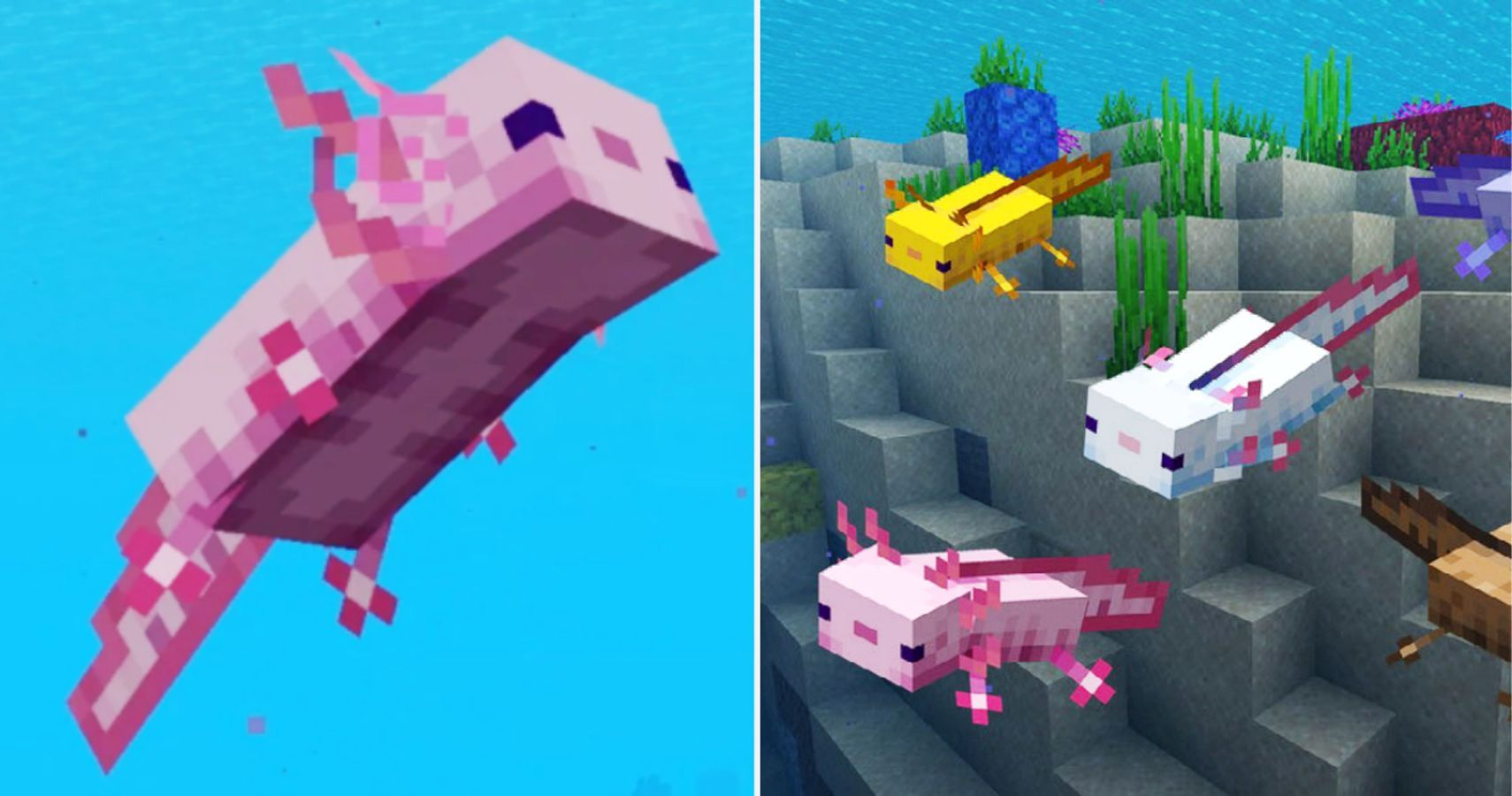 Minecraft: Everything You Need To Know About Axolotls