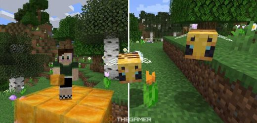 Minecraft: Everything You Need To Know About Bees